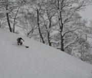 Backcountry Powder Tree Skiing Tenjin Japan