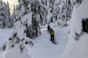 Backcountry skiing through the coastal forest of British Columbia.